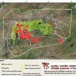 Bustard, Wires, And The Flight To Extinction | Conservation India   Nest Wiring Diagram Baci